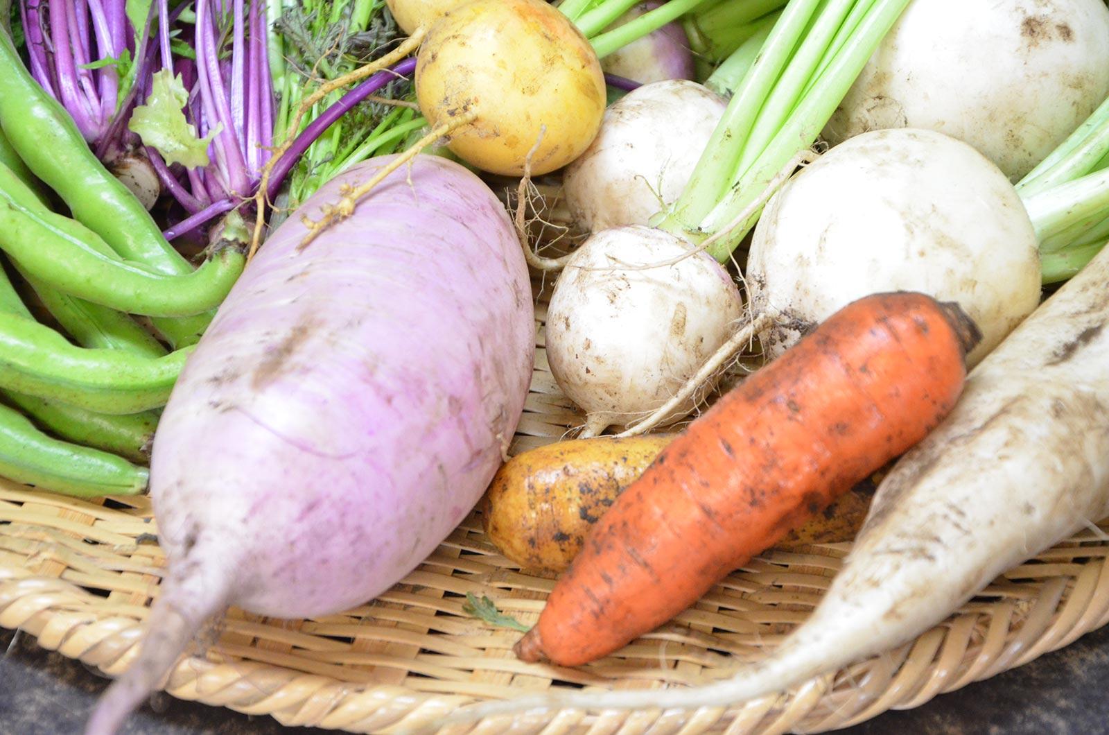 食育指導と栄養指導